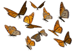 monarch_butterfly_clipart