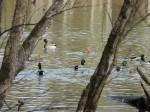bledsoe_creek_state_park-20141220-dscn2875